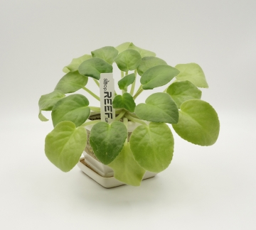 "Бирка для растений ""колышек"" Tama 105x18/ 1 тысяча (вт41) - 3"