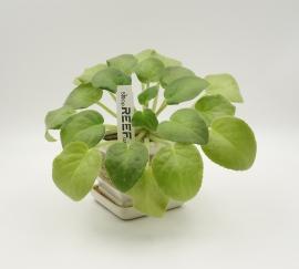 "Бирка для растений ""колышек"" Tama 105x18/ 1 тысяча (вт41). Фото 3"