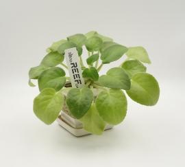 "Бирка для растений ""колышек"" Tama 115x24/ 1 тысяча (вт41). Фото 3"